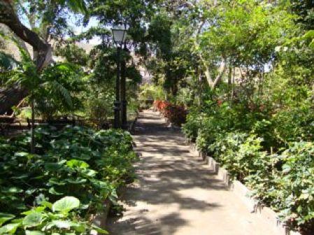 El huerto de las flores de agaete el apur n for Asociacion de plantas en el huerto