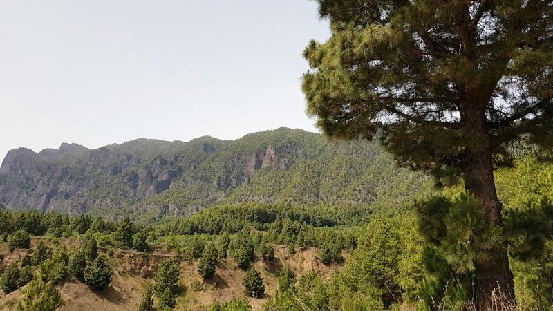 Finaliza la Alerta por Riesgo de Incendios Forestales en El Hierro, La Palma, La Gomera, Tenerife y Gran Canaria